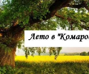 Лето в Комарово